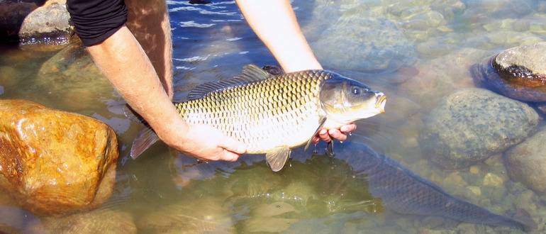 Ловля рыбы
